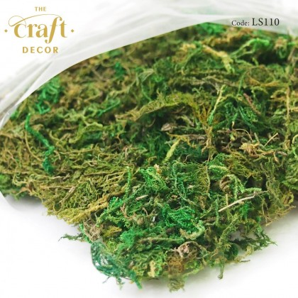 Dry Green Moss