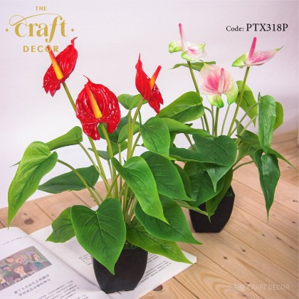 Anthurium Flower With Pot